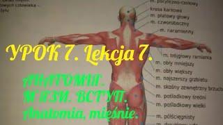 &7.УРОК. АНАТОМІЯ. М'ЯЗИ. ВСТУП. Lekcja 7. Anatomia, mięśnie.