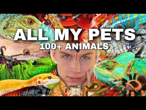 Meet ALL My Pets (I Have 100+ Animals) [🐸,🦔,🐶,🕷,🐢,🦎,🐍,🐜]