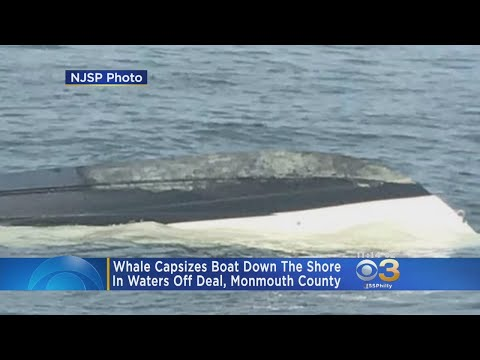 Whale Capsizes NJ Fishermen's Boat, Tosses Them In The Water
