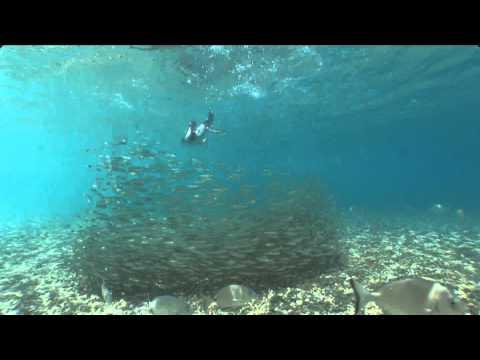 the cormorant underwater