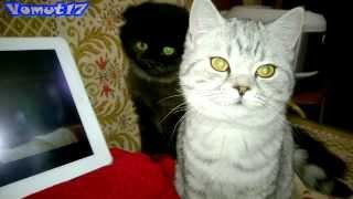 Кошки смотрят фильм!