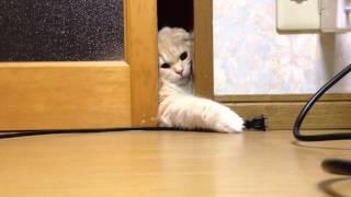 猫「と…届かないっ」ドアのすき間から足を伸ばす(動画)