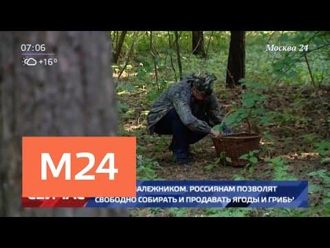 Россиянам позволят свободно собирать и продавать грибы и ягоды Москва 24