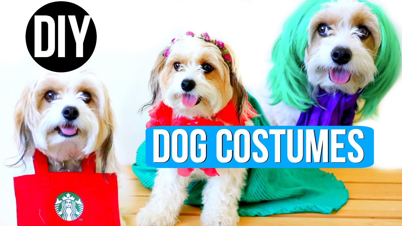Halloween Costume Ideas for Dogs! 7 Cute Ideas - Dog costume ideas for Halloween! 7 cute DIY dog costumes to make you smile! Which costume was your favorite?