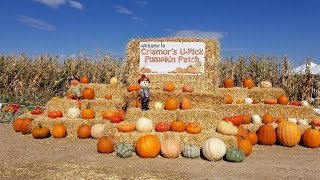 Crismor Farms in Buhl, ID Crismor's U-Pick Pumpkin Patch!