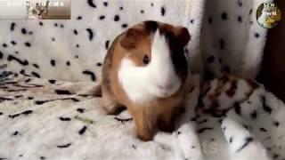 Приколы с животными - лучший юмор | new crazy animals 33