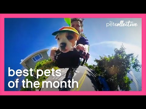 Best Pets of the Month | June 2020