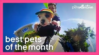 Best Pets of the Month (June 2020) | The Pet Collective