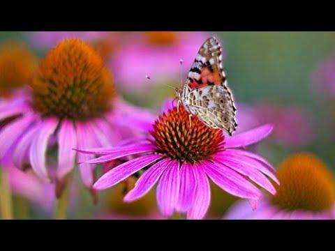 Flowers / Роскошные цветы на клумбе во дворе - YouTube