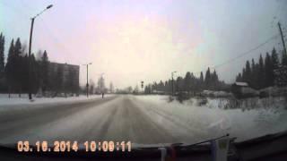 Олененок пробежался по Карельскому проспекту