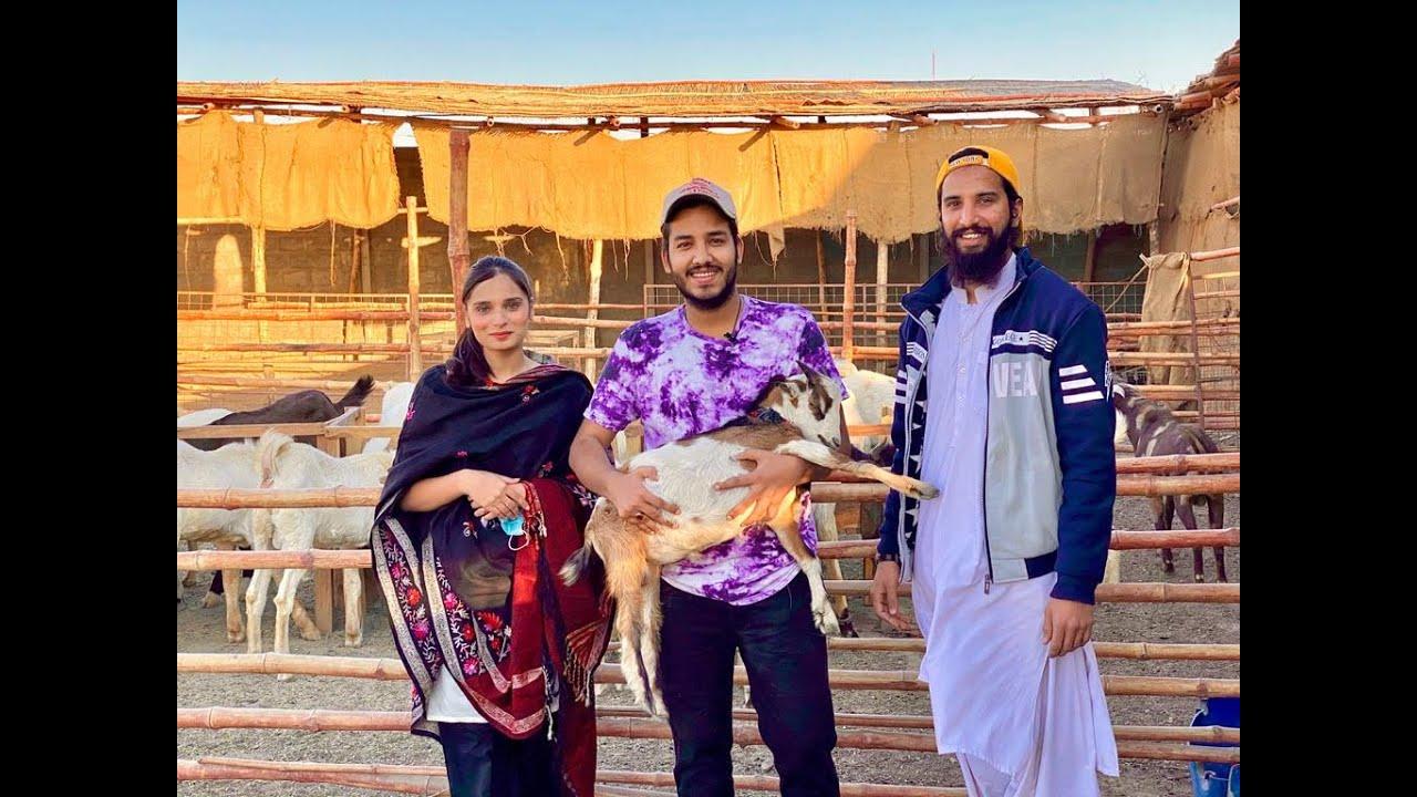 AR Maani Bhai Ka Goat Farm | @AR Maani | Vlog 44 | @Mumid Abbas | Youtuber Life