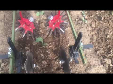 Planet Jr finger weeding Cole crops
