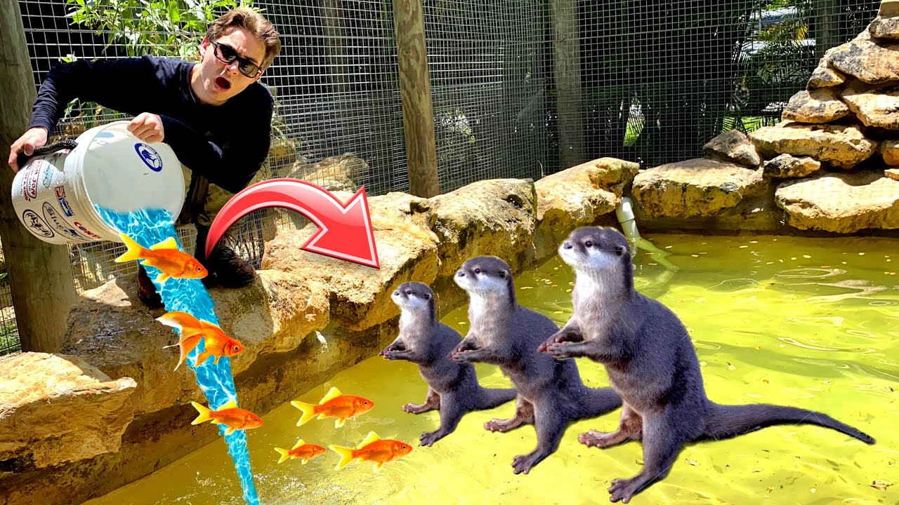 DUMPING 1000+ LIVE FISH INTO POND FULL Of GRUMPY OTTERS ! WILL THEY ATTACK ?!