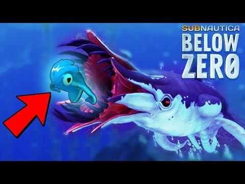 NEW* Creature SEAMONKEY BABY! || Subnautica Below Zero - YouTube