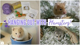 HANGING OUT WITH HAMSTERS & TinyHamsterPaws package!