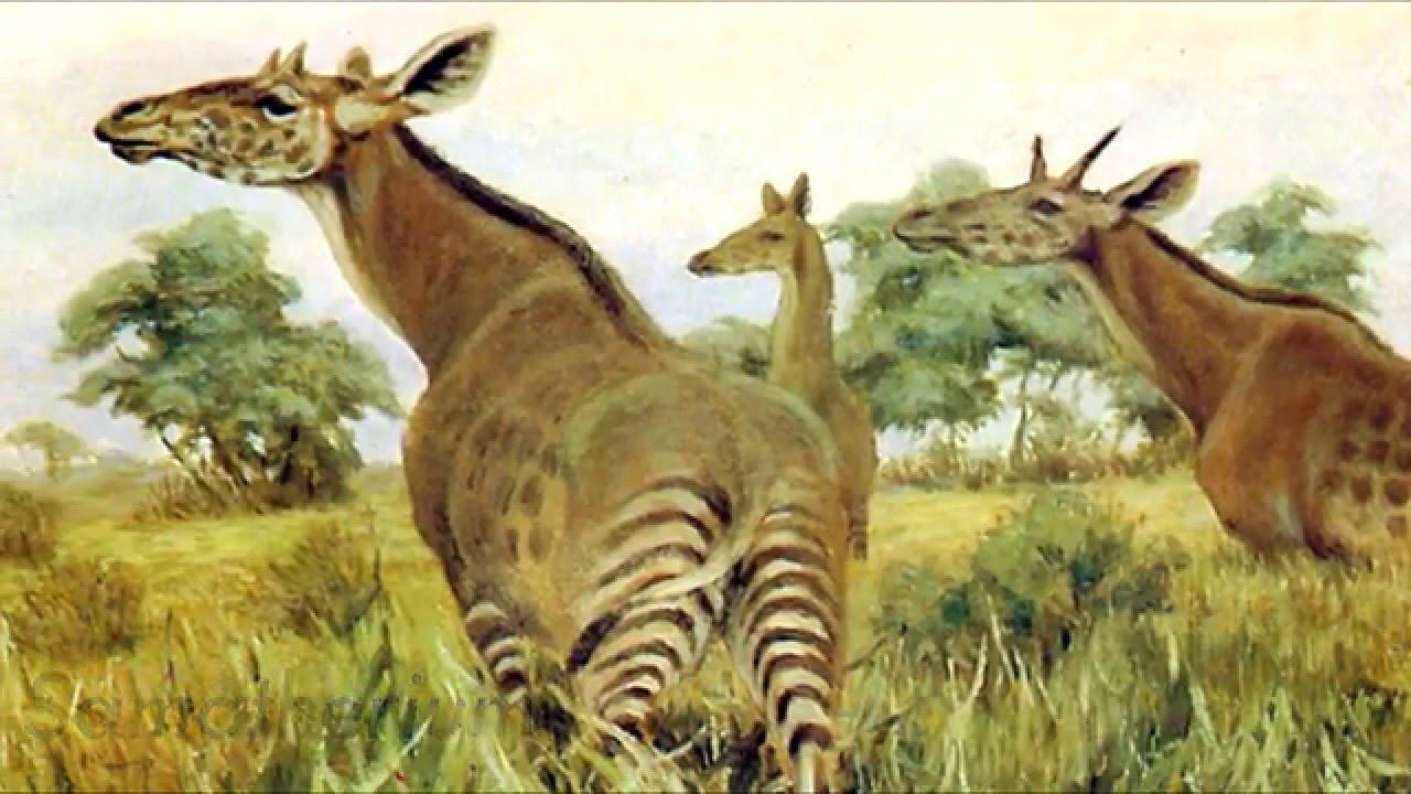 How did the Giraffe Ev...