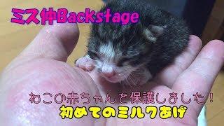 【子猫 保護02】保護した生まれたての赤ちゃん子猫に初めてのミルクあげ【cute Kitten 02】