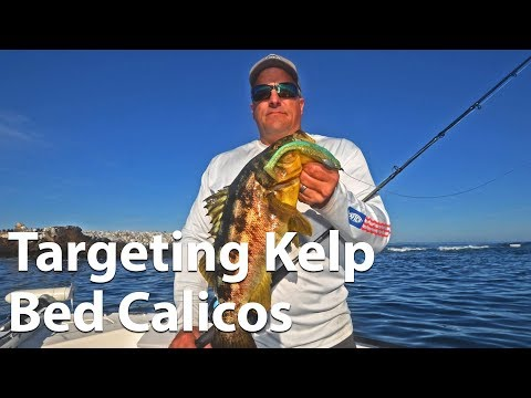 Webinar: Targeting Kelp Bed Calico Bass