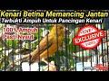 Kenari Betina Memancing Jantan  Mp3 - Mp4 Download