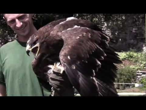 Falcons & Eagles : music Loreena McKennitt