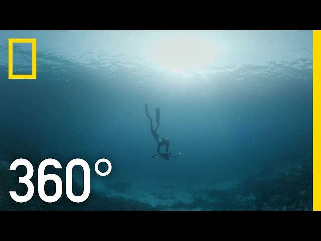 Indonesia's Coral Reefs - 360 | Into Water