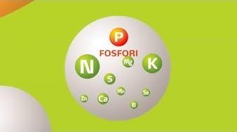 Fosfori