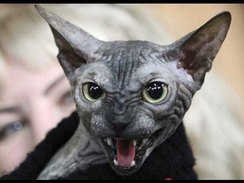 Macri envio ley al congreso para prohibir los gatos en domicilios particulares