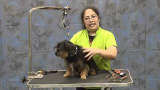 Grooming A Yorkie Mix With Harsh Coat