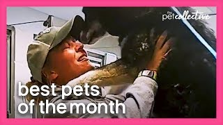 Best Pets of the Month (April 2020) | The Pet Collective