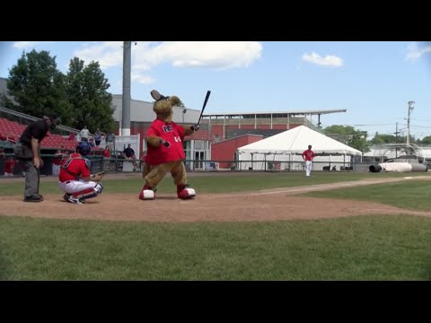 Brockton Rox Mascot K-O the Kangaroo Pinch Hits