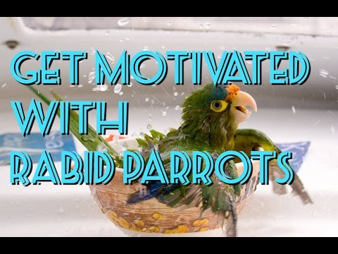 #GetMotivated With Rabid Parrots