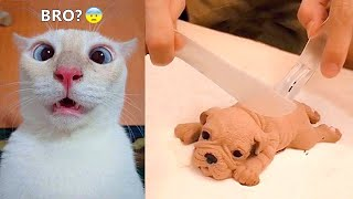 Funniest Animals - Best Of The 2021 Funny Animal Videos #47