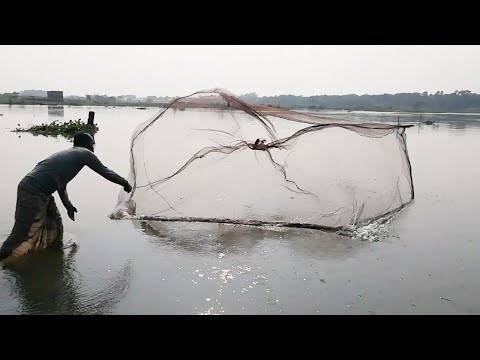 Old Man Fishing By Cast Net | Raw Video ! No Edit ! Huge Fish Catch By Old Man | Primitive Fishing