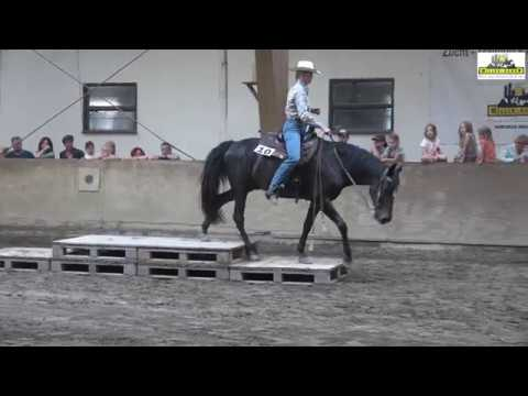 Vevet's Giant Shadow Missouri Fox Trotter at European HP Turnier 5/2017