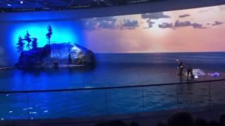 Shedd Aquarium Dolphin Show