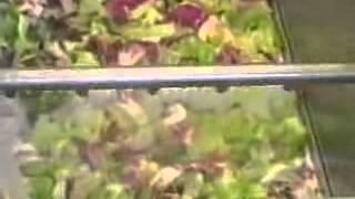 Nilma Линия обработки салатов