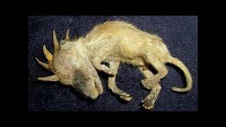 Die 15 gruseligsten und unheimlichsten Aufnahmen von Jäger Cam's | MythenAkte