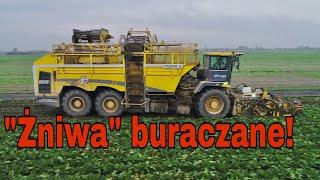 #284-Kopanie buraków cukrowych! Kampania buraczana u Słomka! Nowa Ropa Euro Tiger 6!
