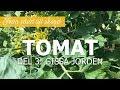 Tomater från sådd till skörd - Del 3: Gissa jorden!