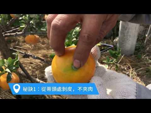 皮薄多汁茂谷柑,如何輕鬆快剝皮?