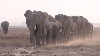 2016年、アフリカ・ルワンダの山中で野生のマウンテンゴリラに襲われな...