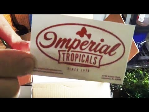 Download Imperial Tropicals Fish Unboxing Go Pro Video MP3