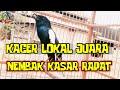 Kacer Gacor Kacer Lokal Tembakan Kasar Rapat Cocok Masteran Burung Kacer Anda Materi Mewah  Mp3 - Mp4 Download