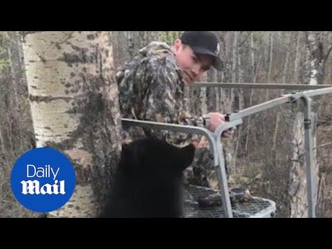 Hunter Has Close Encounter With Bear Cub In Tree Stand