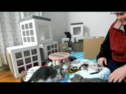 Kitkat Playroom: The Rabbits Gift Unboxing and Big News