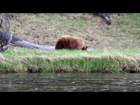Trip to Yellowstone May 12 17 2019 01