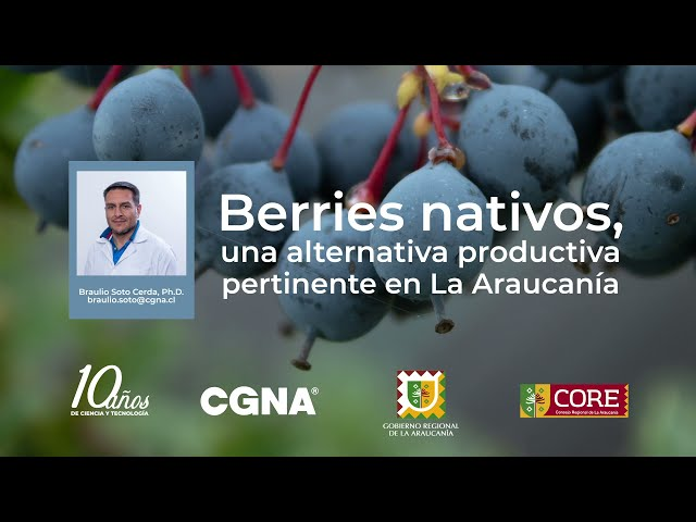 Berries nativos, una alternativa productiva pertinente
