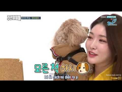 [GOD Subteam] Vietsub WEEKLY IDOL EP 336 |  Jeonghwa, Minhyuk + Jooheon, DK + Mingyu, Kim Chung Ha