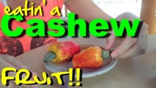 Cashew fruit picking on a monday morning - Our life by design living in costa rica travel blog