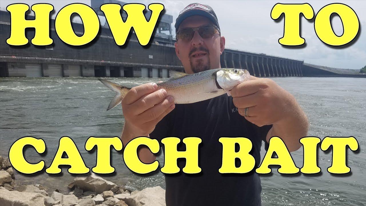 FISHING TACKLE BAIT LURES SKIPJACK TUNA STRIPED KING FISH ...  Skipjack Minnow